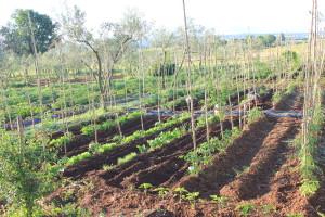 Orticoltura agricoltura