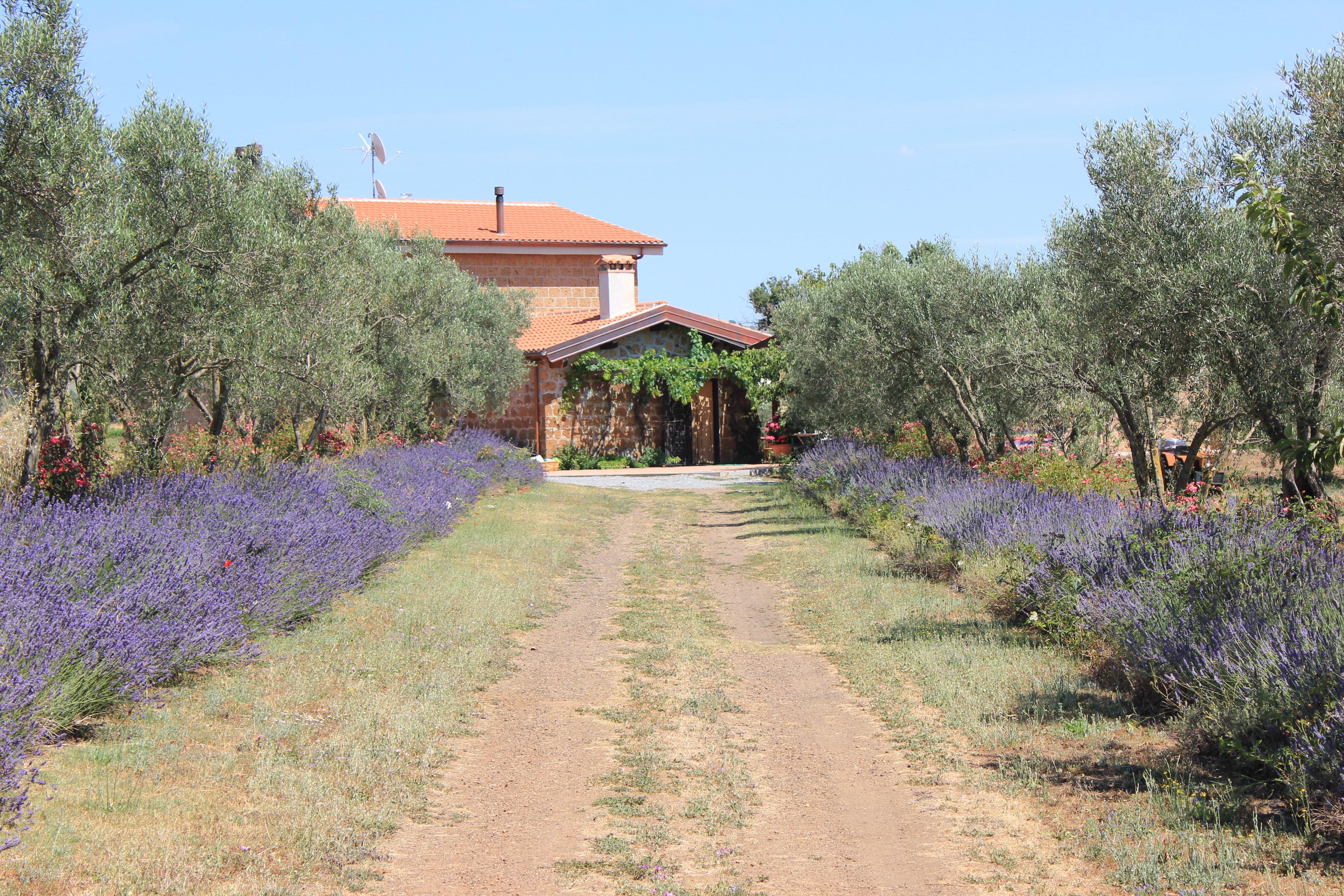 Orto giardino il giardino nell 39 orto for Orto giardino